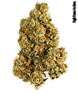 legalization of marijuana for medical use essays