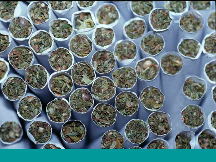 an examination of the canabis usage in canada It makes an amsterdam coffeeshop look tame – and it's this free-for-all, wild-west- of-weed attitude that canada's government wants to tame by legalising cannabis during prime minister justin trudeau's first term in office laws that will legalise cannabis for recreational use will be announced in the week of.